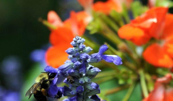 5 Fun Things to do in Eureka Springs This Spring