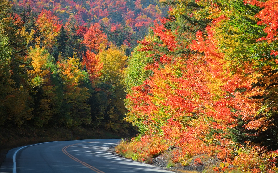 This exquisite foliage along the highway is what makes fall one of the best time of year to Visit our Eureka Springs Bed and Breakfast